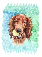 Dogs- Irish Terrier