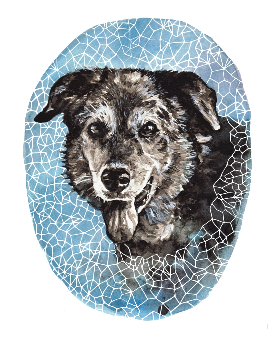 amy dog 3
