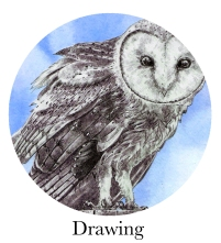 drawingbanner
